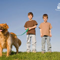 healthy-snacks-for-kids---boys-walking-a-dog-4